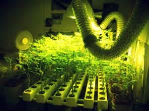 Planning your Marijuana Grow Room