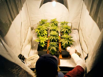 how to grow marijuana indoors