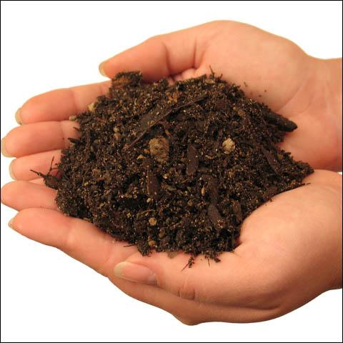 soil for marijuana