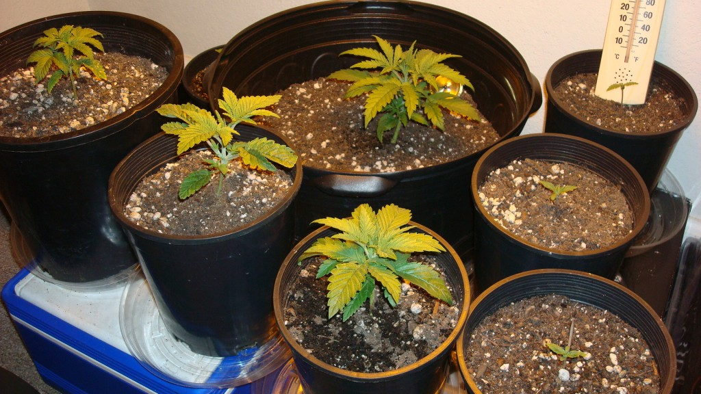 how-to-grow-weed