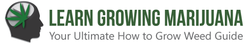 Learn Growing Marijuana
