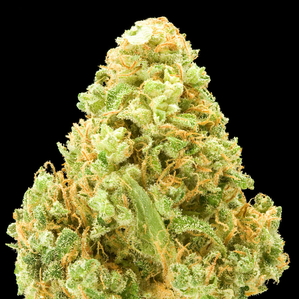 The List Of The Cannabis Seeds Strains With The Highest
