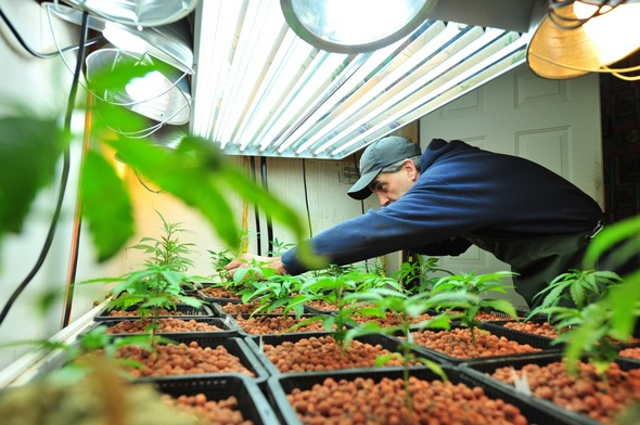 the advantages of using the hydroponic system New trends in hydroponic growing: what to expect in 2016 and beyond which combine the benefits of multiple hydroponic systems though an increasing number of farmers are using hydroponic systems to grow fodder for their livestock.