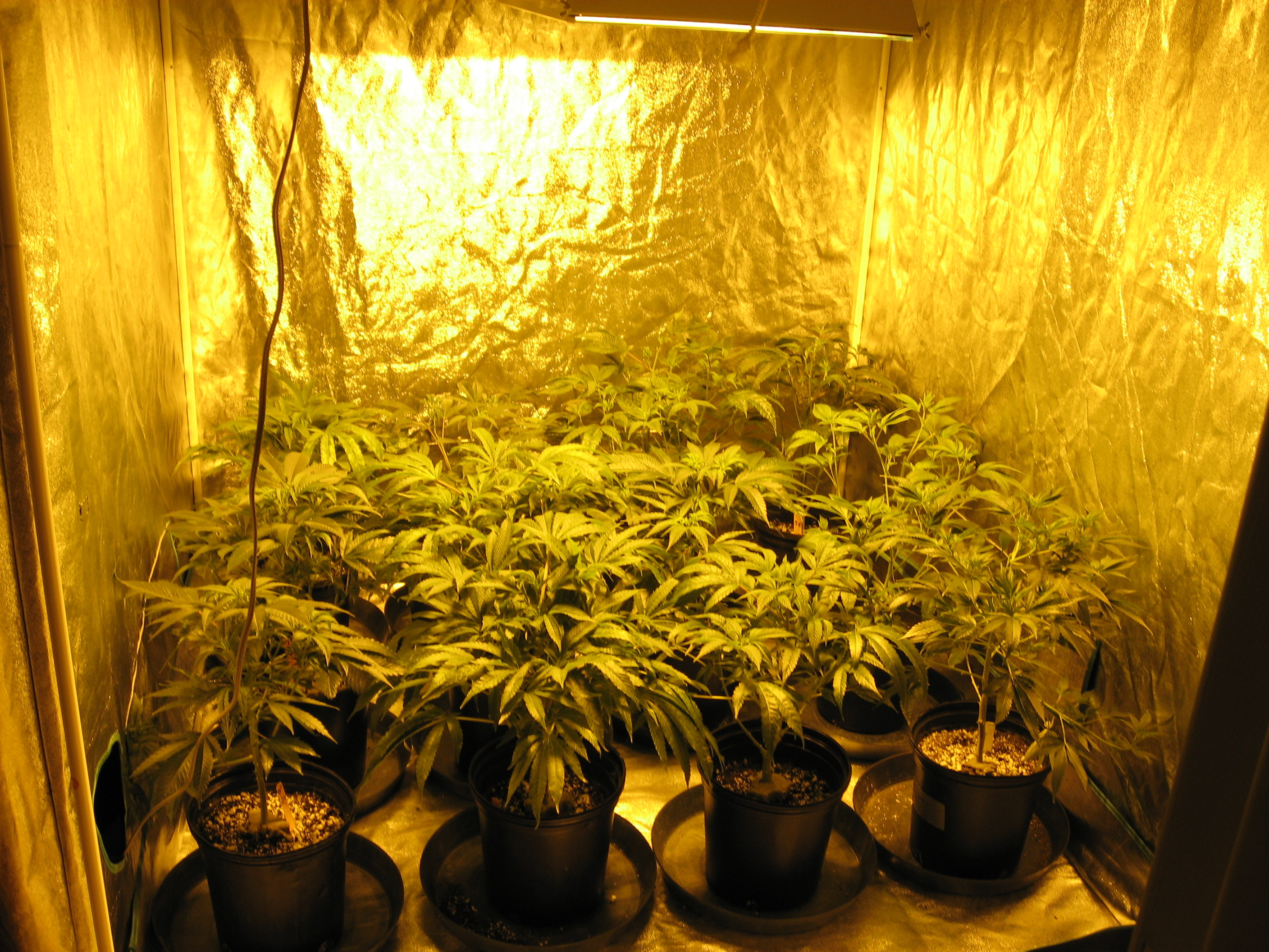 growing marijuana indoors closet falia