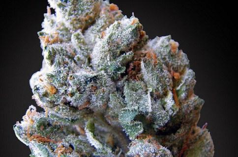 Blueberry Kush Marijuana Strain Review