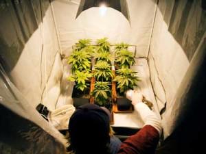 Best-Lights-to-Growing-Weed-Indoors