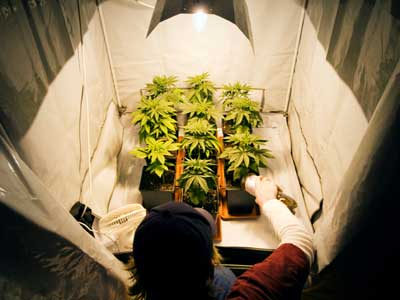 Best-Lights-to-Growing-Weed-Indoors & Grow Tents For Sale: Using Grow Tents for Growing Marijuana ...