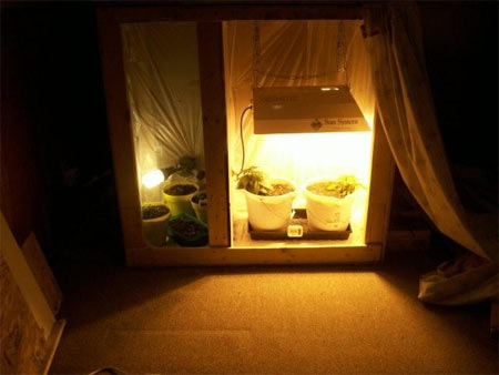 Growing Marijuana Indoors With Marijuana Grow Cabinet