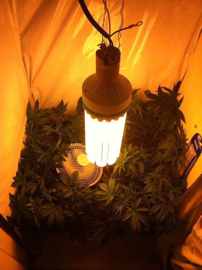 the best lights to grow marijuana learn growing marijuana. Black Bedroom Furniture Sets. Home Design Ideas