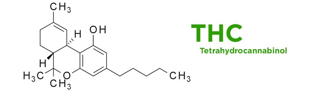 how to get thc cooh out of your system