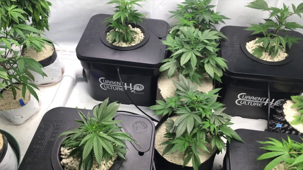Continuous Flow Solution Culture Hydroponics For Marijuana