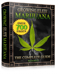 buy growing marijuana ebook