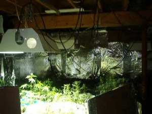 How to Grow Marijuana Indoors - Grow Room