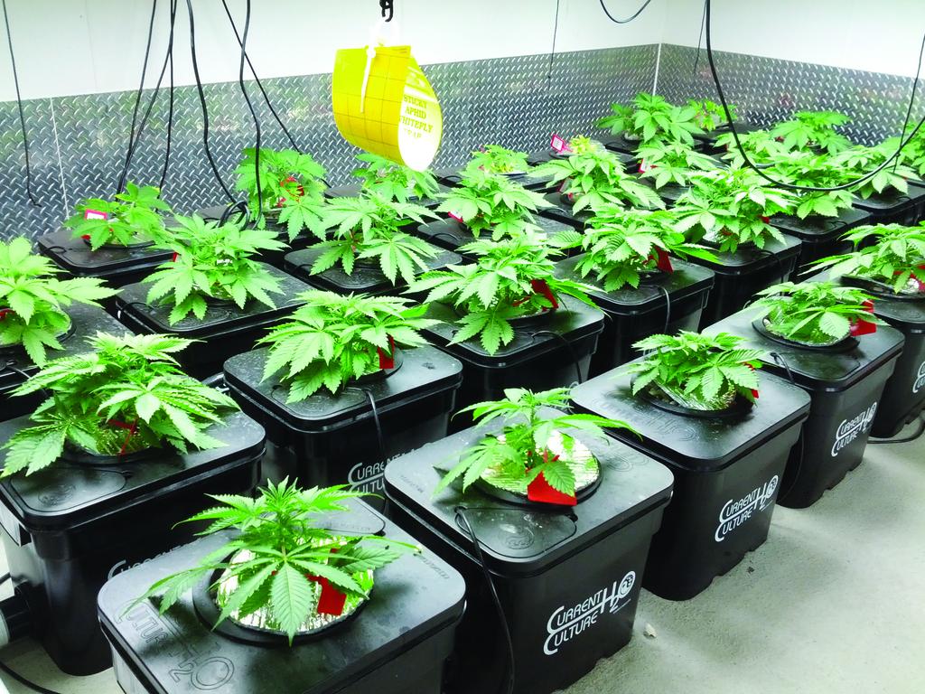 Гидропонные установки для марихуаны конопля и импотенция