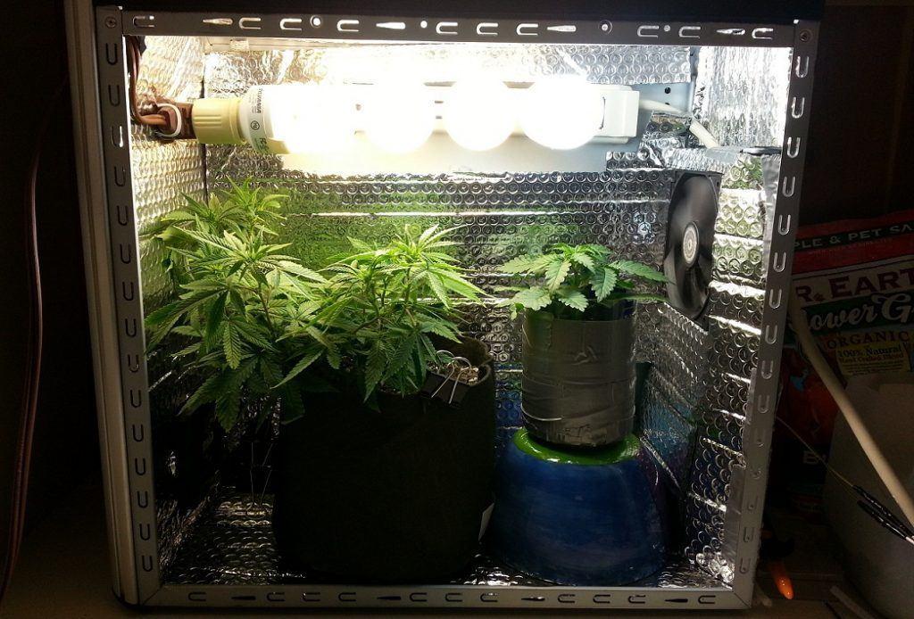 Марихуана в боксах из чего можно вырастить марихуану