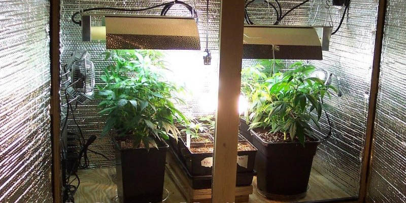 Cheap Indoor Grow Set up for Weed